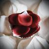 Les Petits Bonbons - Les Petits Bombones - Rose Petal Explosion
